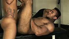 Hung black stud gets his hairy ass hammered by his horny lover at the gym